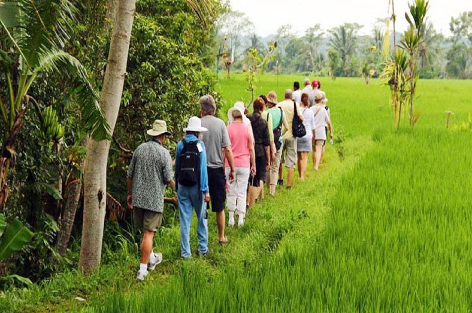 Bali-Rice-Padi-Trekking-6.jpg