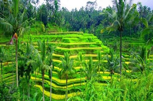Tegalalang-Rice-Terrace-Bali-Sunrise-Trekking
